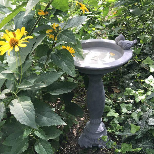 wodopój dla ptaków w ogrodzie