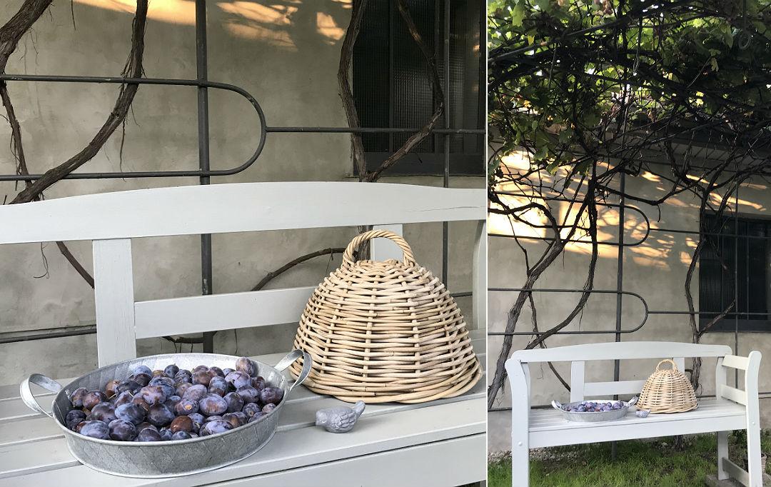 śliwki węgierki, zebrane z własnego ogrodu