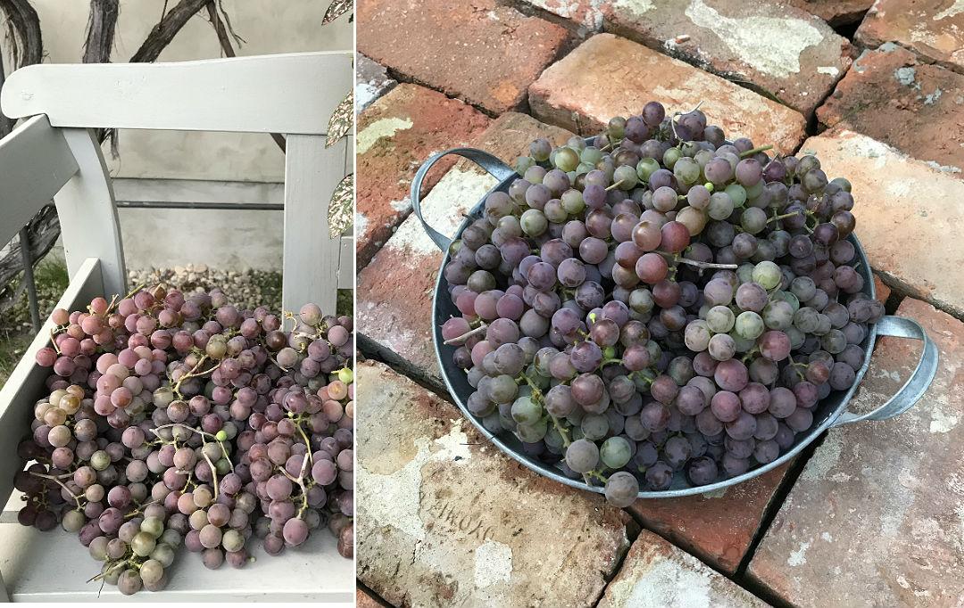 owoce z własnego ogrodu, dary późnego lata, smaki