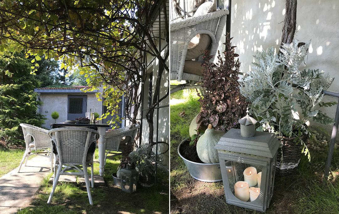 jesienny ogród w jesiennej szacie winogron