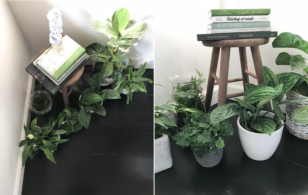 rośliny zielone w domu, urbanjungle, O roślinach, Epipremnum pinnatum marble planet