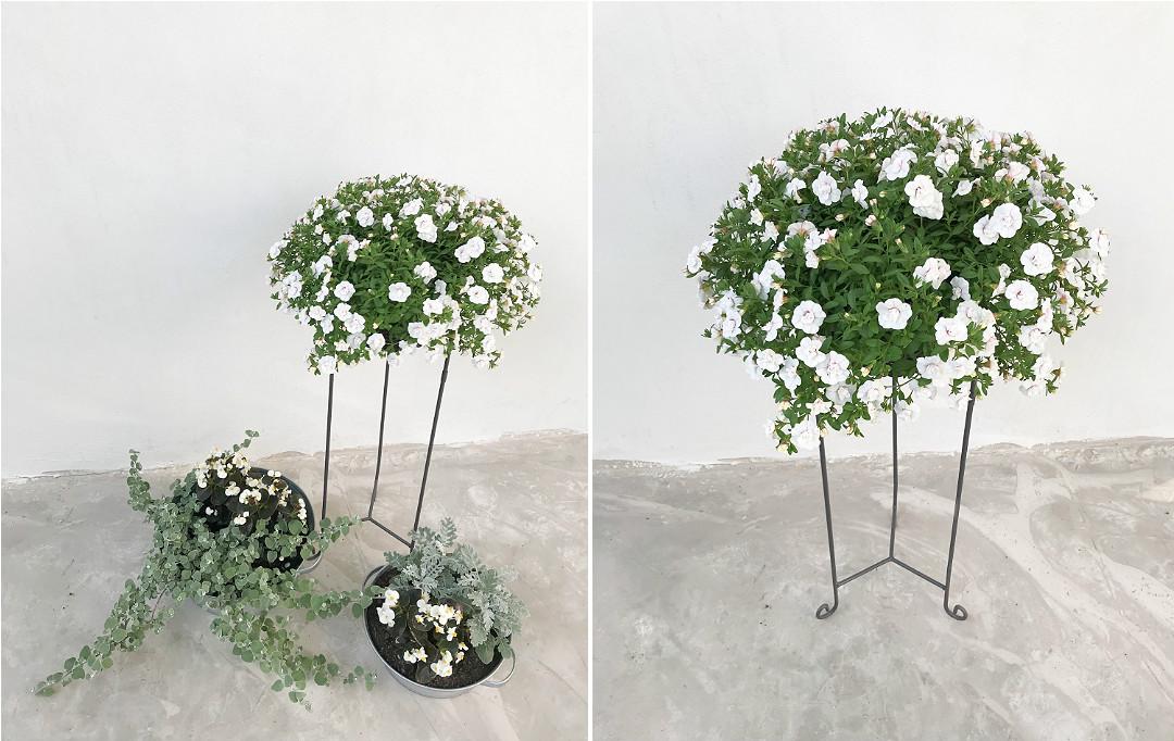 kwiaty jednoroczne na tarasie kompozycja