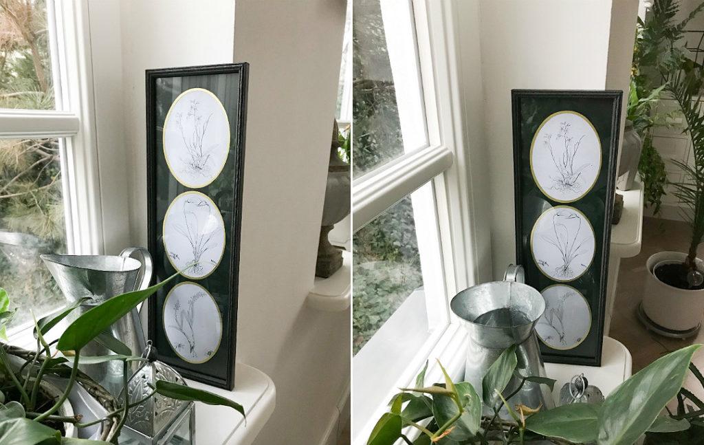 multirama z rycinami botanicznymi rośliny szkice
