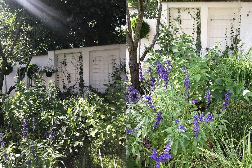 ogród, ogrody, piękne ogrody, ogród ze smakiem, szałwia