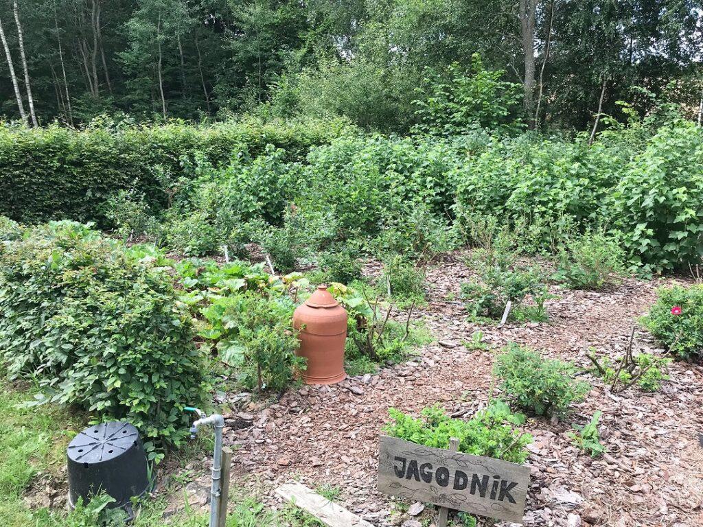 ogród Bellingham, ogród warzywny, warzywnik, ogród pokazowy, jagodnik