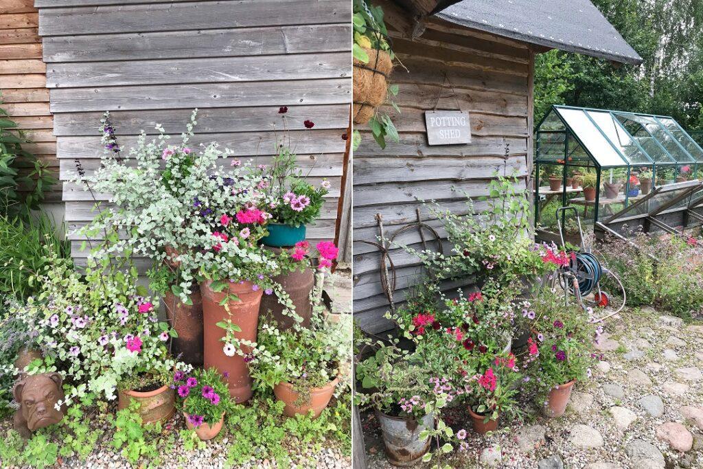 ogród Bellingham, ogród w pojemnikach, rośliny w pojemnikach, kwiaty w donicach, ogród w donicach