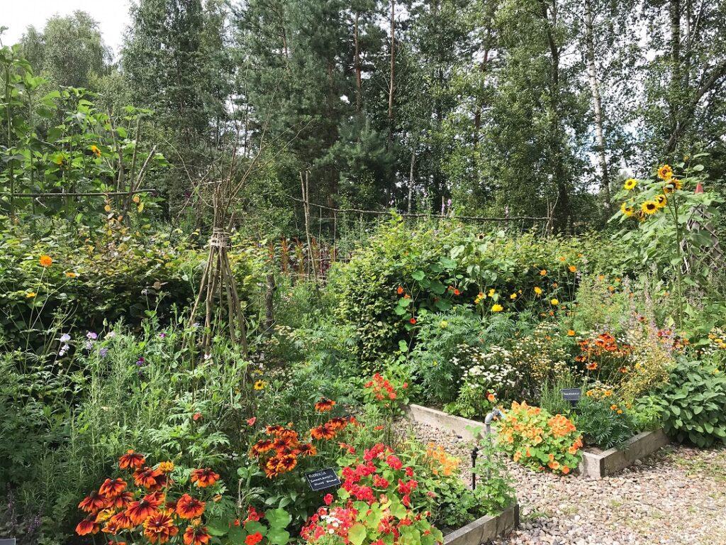 ogród Bellingham, ogród warzywny, warzywnik, ogród pokazowy
